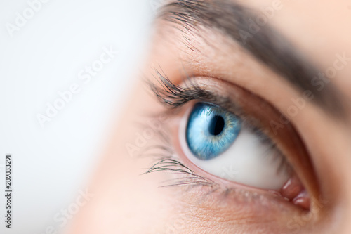 Fototapeta Beautiful human eye close-up. Young Woman Blue one eye macro shoot. Macro Closeup eye looking up, isolated on white background. Eyelashes, eyebrows closeup obraz