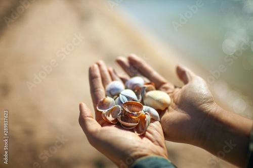 Keuken foto achterwand Spa seashells in human hands on blue sea background