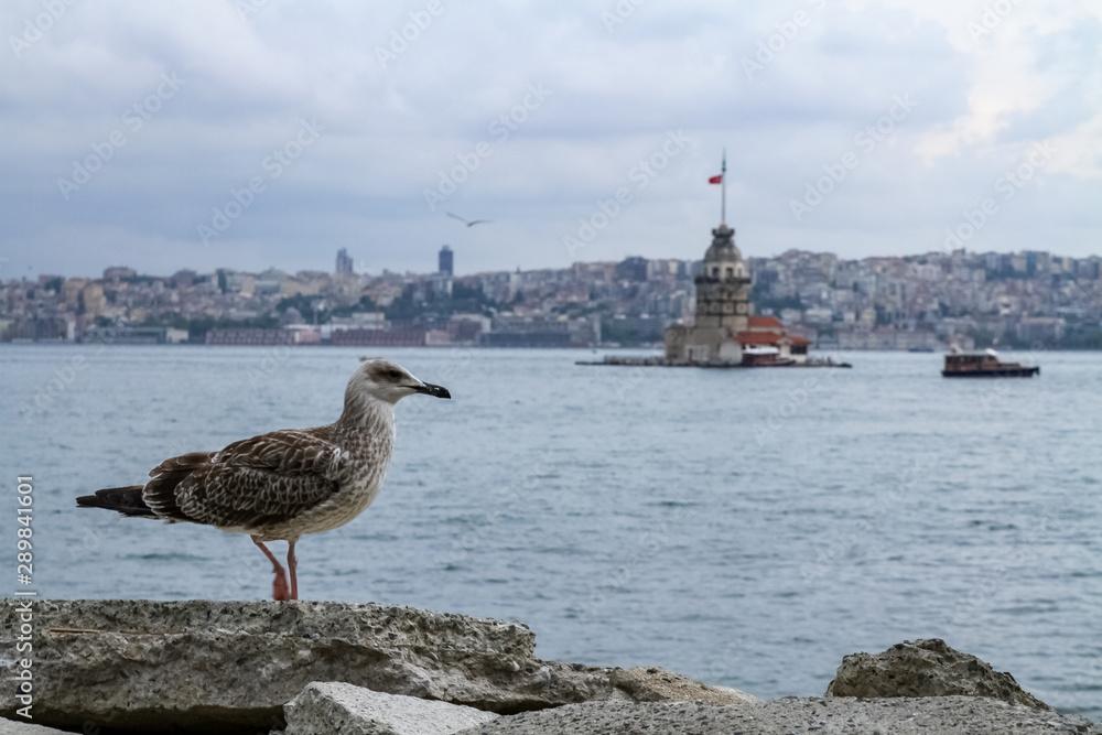 Martı ve Kız Kulesi, İstanbul
