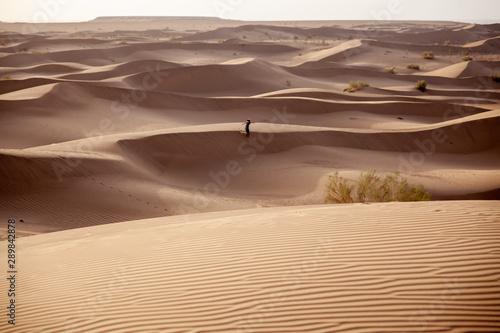Les magnifiques dune de sable du désert Iranien Canvas Print