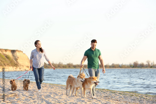 Obraz Young couple walking their adorable dogs near river - fototapety do salonu