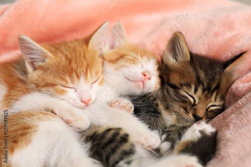 Cute sleeping little kittens on pink blanket Canvas Print