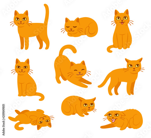 Fotografie, Obraz Cartoon cat poses set