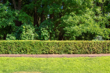 Garden Area / Beautiful Garden Area With Green Hedge And Trees