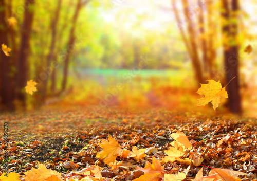 Beautiful autumn landscape with yellow trees and sun Fotobehang