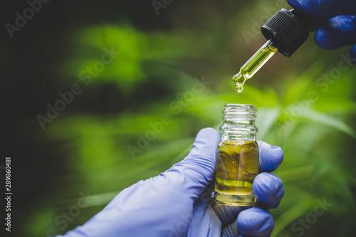 Photo  Hand holding bottle of Cannabis oil in pipette, Hemp oil, medical marijuana concept, CBD cannabis OIL