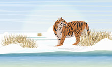 A Large Realistic Tiger Walks Along The Banks Of An Ice-covered River. Dry Grass, Snowdrifts And A Cold Sky. Extinct Species Of Asia. Realistic Vector Landscape