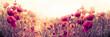 Poppy flower, wild red poppy flower in meadow