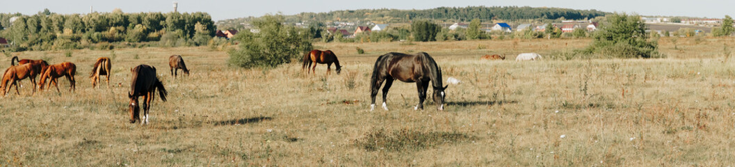 horses graze outdoors in the autumn field