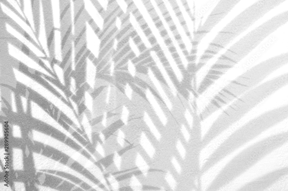 Fototapeta Light and shadow leaves,palm leaf on grunge white wall concrete background.Silhouette abstract tropical leaf natural pattern for wallpaper, spring ,summer texture.Black and white  soft image backdrop.