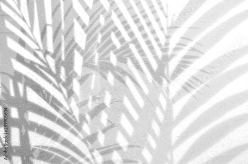 Naklejki na drzwi Gra światła na czarno białych liściach