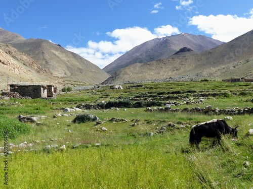Fotografija Paesaggio bucolico nelle montagne del Ladakh in India.