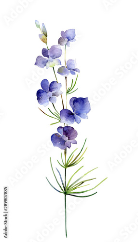 Foto Watercolor delphinium flower on white background