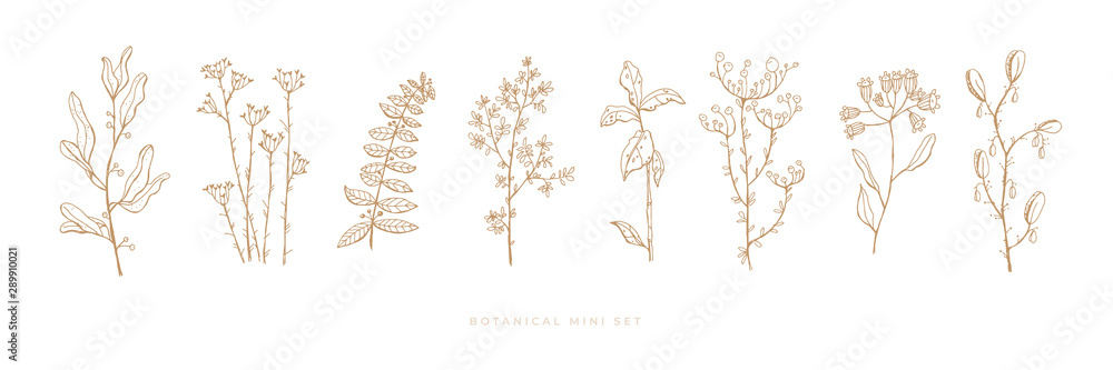 Set hand drawn grass and flowers on white isolated background. Trendy wildflowers and herbs. Botanical illustration. Decorative floral picture.