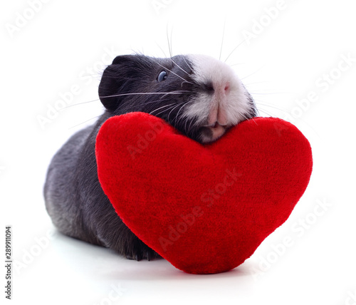 Fotomural  Guinea pig and heart.