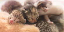 Cute Newborn Kittens Are Sleeping, Small Baby Animals Sleep.