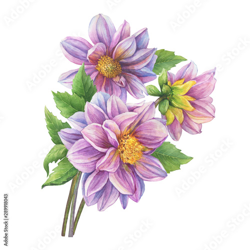 Poster Dahlia Beautiful autumn bouquet with pink Dahlia flowers. Watercolor hand drawn painting illustration isolated on white background.