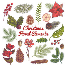 Xmas Floral Set. Flower Christmas Decorations, Watercolor Elements With Branches Of Vintage Traditional Plants And Berries Vector Set