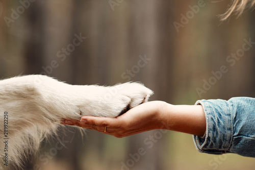 Fotografía  Dog is giving paw to the woman