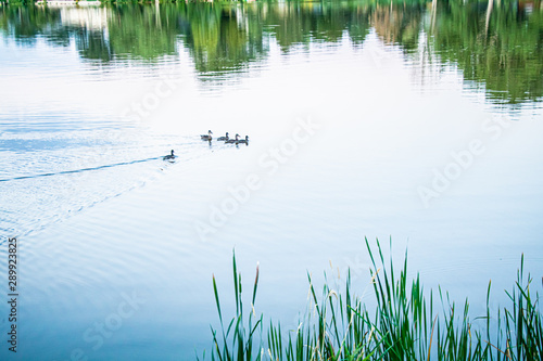 Photo  Colorado village lake with boats and daisies