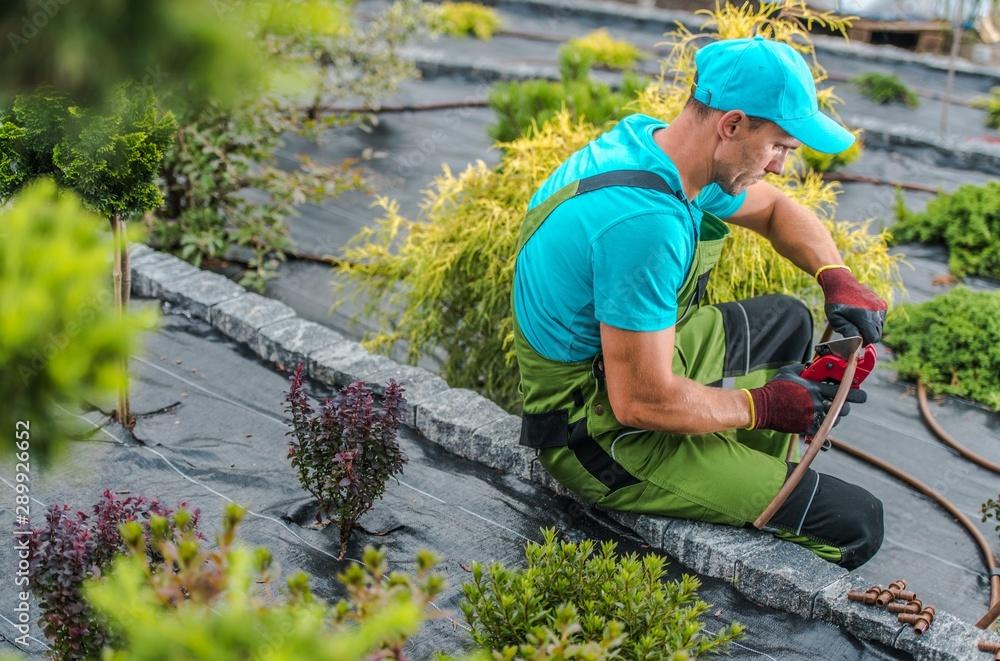 Fototapeta Backyard Garden Irrigation