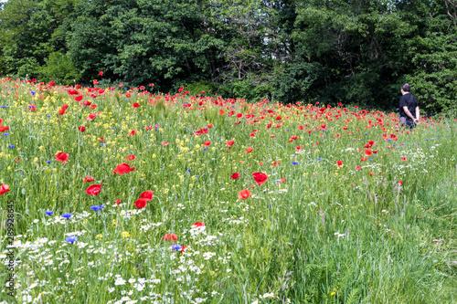 homme admire un champs de fleur Wallpaper Mural