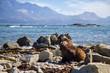 point Kean seal colony, Kaikoura, New Zealand