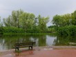 paved shore at a pond, a bench covered with lichen and moss. On the other side of the pond bushes and trees, reeds. It is rainy weather