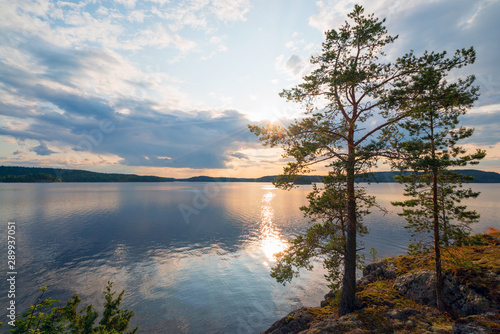 Pine trees on the edge of the shore of the island on lake Ladoga Fototapet