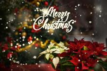 Christmas Flowers,Poinsettia Plants,text Merry Christmas Illuminated Tree Background Snow