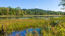 Aquatic Plants In A Wetlands A...
