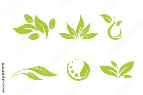 Cuadros en Lienzo leaf logo icon vector set