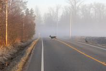 Deers Crossing Road During Ear...
