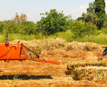 Baling Hay In Field With Machine At Plant.