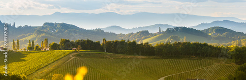 Wall Murals Autumn South styria vineyards landscape, near Gamlitz, Austria, Eckberg, Europe. Grape hills view from wine road in spring. Tourist destination, panorama