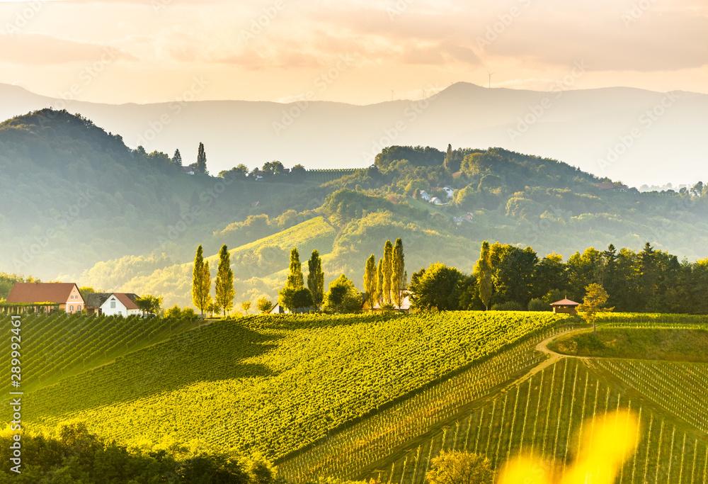 Fototapeta South styria vineyards landscape, near Gamlitz, Austria, Eckberg, Europe. Grape hills view from wine road in spring. Tourist destination, panorama