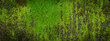 Leinwanddruck Bild - Moss green texture. Moss background. Green moss on grunge texture, background. Long web banner