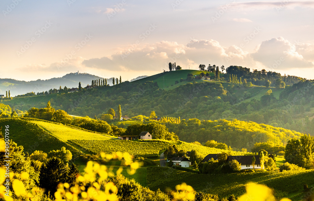 Fototapeta Panoramic view from vineyard to green hills of south styrian wine route in Austria in sunset. Glanz an der Weinstrasse.