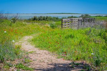 Fototapeta na wymiar A very long boardwalk surrounded by shrubs in Aransas NWR, Texas