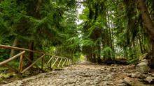 Path To Waterfall Kamienczyk In Szklarska Poreba Forest, Poland.