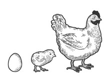 Egg Chicken And Hen Sketch Eng...