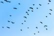 A flock of birds on blue sky background close up_