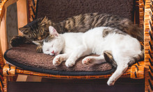 Two Cats Sleep On A Wicker Chair. Pets_