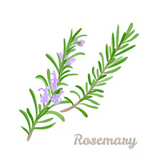 Branch Of Blooming Rosemary Isolated On White Background. Vector Illustration Of Fragrant Herbs, Fragrant Spices In Cartoon Simple Flat Style.