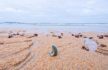 Dead Green Mussel Shell On The Beach Unclean Sand Stone With Blurred Ocean Background