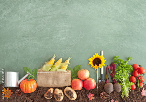 Autumn seasonal organic fruits and vegetables - 290065238