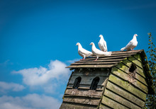 Four White Doves On A Dovecote Against A Blue Sky