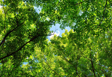 Trees With Shades Of Green Covering The Pathway Showing Buw Sky And White Cloud On Sunny Day On A Trail In Ottawa, Canada