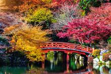 Autumn Season In Japan, Beautiful Autumn Park.