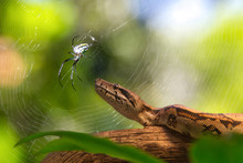 Friends Talk About The Situation In The Zoo, The Spider In Its Spider Web And The Snake On A Tree Branch That Serves As A Home